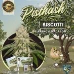 Pisthash by T.H.Seeds™ Feminized
