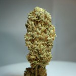 Strawberry Glue Feminized - Dry