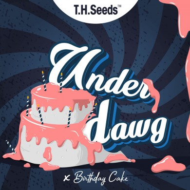 Underdawg X BC X SBC - Regular Limited Edition Seeds