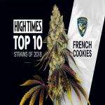 T.H.Seeds™ French Cookies Strain Review