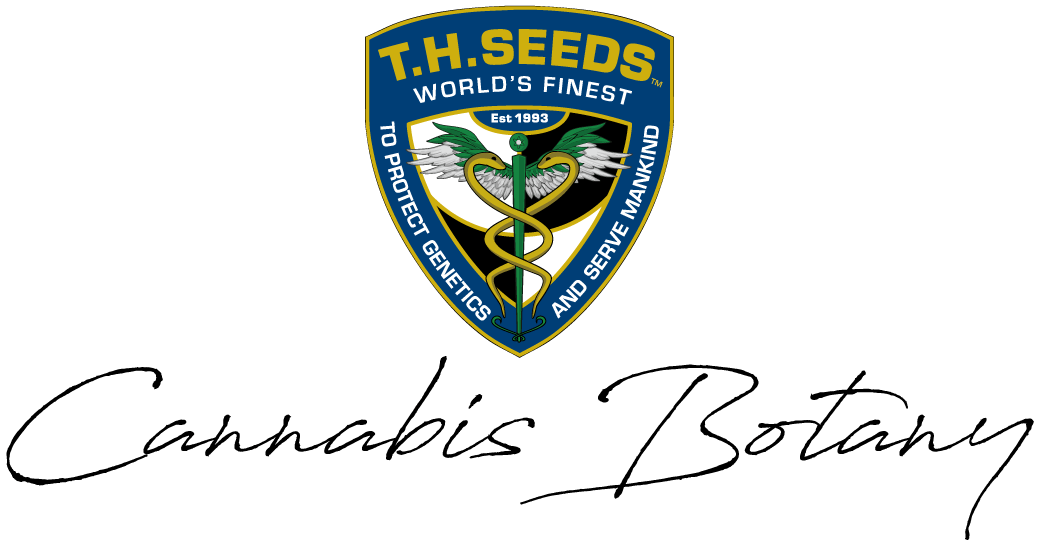 T.H. Seeds Cannabis Botany