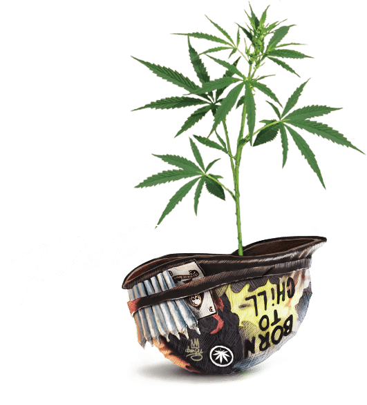 T.H.Seeds™ Pot Helmet